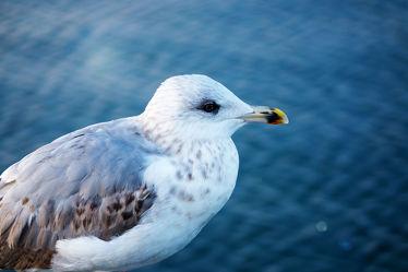 Bild mit Tiere, Natur, Urlaub, Deutschland, Sommer, Vögel, Möwen, Federn, Strandblick, Ostsee, nahaufnahme, Schnabel, Tierportrait