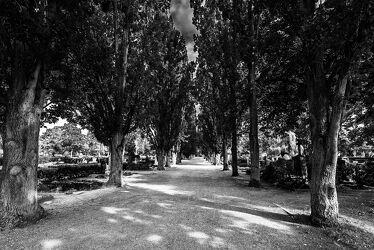Bild mit Natur, Pflanzen, Bäume, Blumen, Weg, Allee, Straße, Friedhof, Gräber, Symmetrie