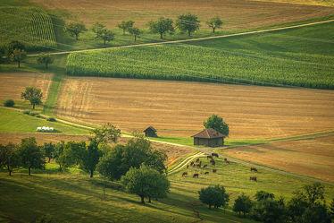 Bild mit Landschaften, Obstbäume, Kühe, Bauernhaus, Grüne Farben, scheune, schwarzwald, farm