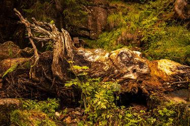 Bild mit Farben, Wald, Märchenwald, Abstrakte Kunst, Baumwurzeln, Formen und Stimmungen, schwarzwald, fokus