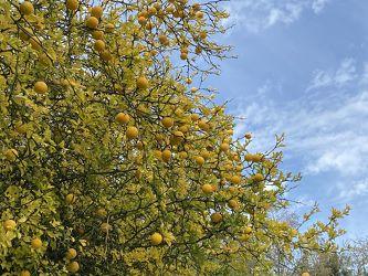 Bild mit Gelb, Orangen, Kontraste