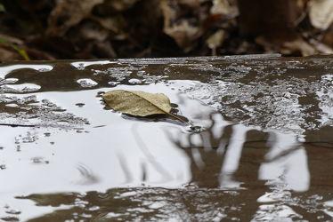 Bild mit Blatt, Regen, nass, Wasserspiegelung, Pfütze