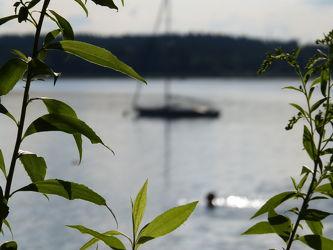 Bild mit Pflanzen, Seen, Segelboot, Unschärfe, Schärfe