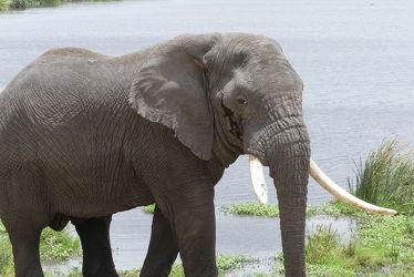 Bild mit Natur, Elefant, Portrait, Naturschutzgebiet, Tierportrait, safari