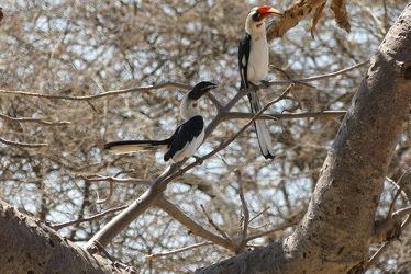 Bild mit Natur, Vögel, Baum, Vogelart, Afrika, Nationalpark, safari