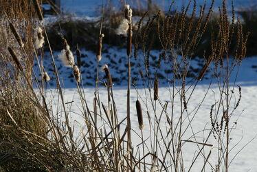 Bild mit Winter, Schnee, Seen, Schilf, winterlandschaft, Winterbilder, gefroren