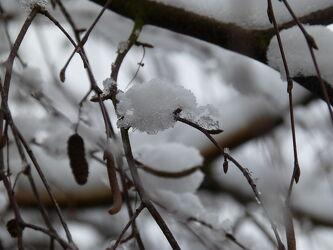 Bild mit Winter, Schnee, Eis, Winteraufnahmen, Winterbilder, gefroren, Unschärfe, Zweig, Schärfe