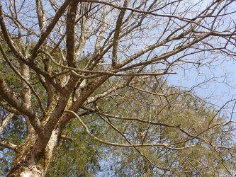 Bild mit Bäume, wunderschön