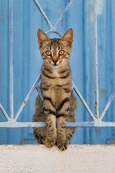 Junges Kätzchen in blauem Geländer