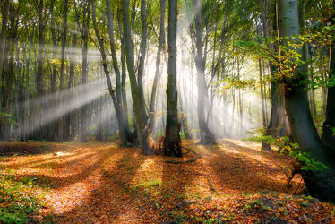 Sonnenstrahlen im herbstlichen Buchenwald