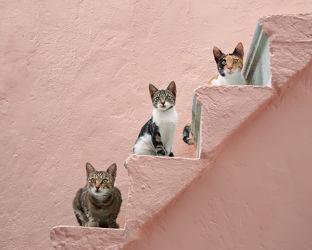 Bild mit Tiere, Rosa, Haustiere, Katzen, Tier, Kinderbilder, Kinderzimmer, Katze, Katzenbilder, Tierisches, Bunte Tierwelt, tierisch, Fotografien Tiere, Animal, Tierwelt, lustig, witzig, treppe, Tierliebe, Haustier, Tierbilder, Tierfoto, kitty, Kätzchen, hauskatzen, Treppenstufen, lieb, Katzenbild, Katzenbild, Katzenliebhaber, Tierfreunde, Katzenfreund, Samtpfote, Katzenfoto, Katzenporträt, Katzen in Griechenland, drei Katzen, Katzen Freunde