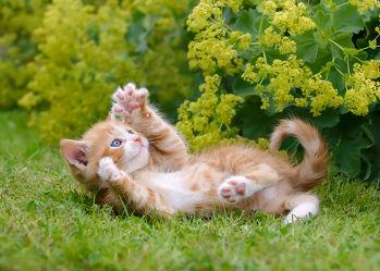 Bild mit Tiere, Katzen, Tier, Kinderbild, Kinderbilder, Kinderzimmer, Katze, Katzenbilder, Tierisches, Bunte Tierwelt, Tiere und Tierkinder, tierisch, Fotografien Tiere, garten, Animal, Tierwelt, lustig, witzig, niedlich, Spielen, Tierliebe, Haustier, Jung, Tierbilder, Tierfoto, süß, kitty, Katzenbaby, Tierkind, Katzenwelpe, Kätzchen, hauskatzen, hauskatze, lieb, Katzenbild, Katzenliebhaber, Tierfreunde, Katzenfoto, Katzenkind, Katzenfreunde, spielendes Kätzchen