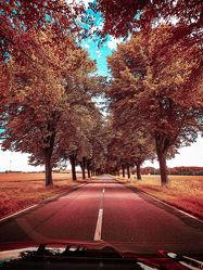 Bild mit Natur, baumallee, Straße, street