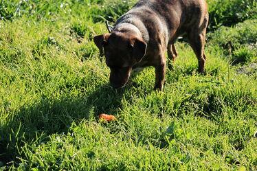Bild mit Gräser, Hunde