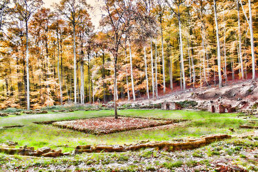 Bild mit Natur, Wald, Baum, romantik, Rasen