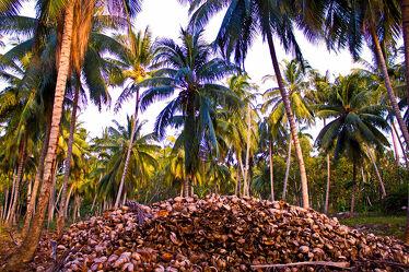 Bild mit Natur, Palmen, Reise, palmenblätter, Kokusnuss