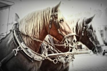 Bild mit Tiere, Pferde, Pferdekopf, Pferdepotrait
