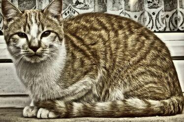 Bild mit Fenster, Haus, Tier, Katze, Fensterblick