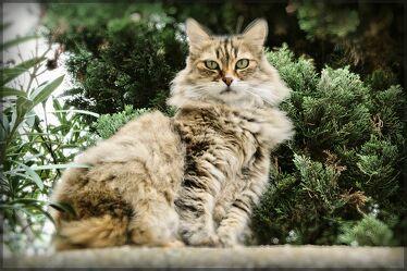 Bild mit Natur, Landschaften, Katzen, Wald, Landschaft, Katze, Kater
