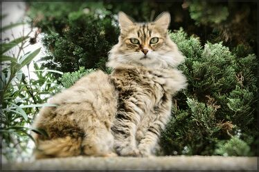 Katze am Waldesrand