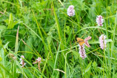 Bild mit Tiere, Natur, Pflanzen, Blumen, Schmetterlinge, Blume, Pflanze, Wiese, Animals, Raupen und Schmetterlinge
