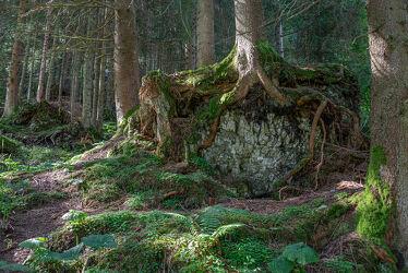 Bild mit Wälder, Wald, Waldlichtung, Märchenwald, Märchen Wald, Waldblick, Mystik, mystisch