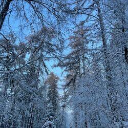 Bild mit Schneelandschaften