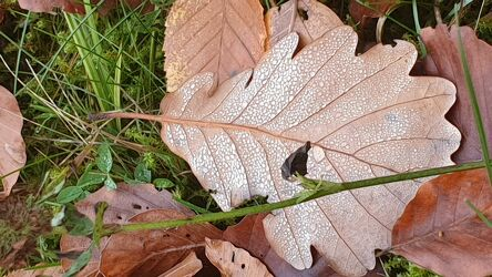 Bild mit Blätter, Birkenblätter, Waldboden, Blattstruktur, Laubblatt