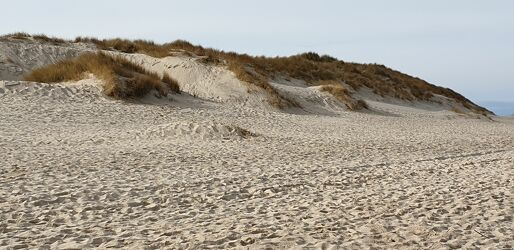 Bild mit Pflanzen, Sandstrand, Dünen, Nordsee, Sylt, Insel Sylt, Dünenlandschaft, Strand & Meer, Nordseeküste, Nordseeinsel