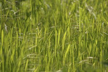 Bild mit Grün, Pflanze, Gras, garten, Graslandschaft