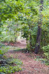 Bild mit Grün, Wald, Weg, Waldweg, Blätter, Laubwald, Wandern, spazieren, Laub, Herbstlaub