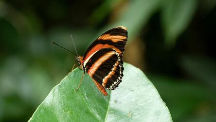 Bild mit Hintergrund, Makroaufnahme, Pflanze, Fauna, Tiere & Insekten, macro, Details, grünes Blatt