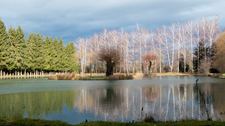 Bild mit Natur, Nadelbäume, Wolken am Himmel, Insel, Spiegelungen, Weiherrand, Wasseroberfläche