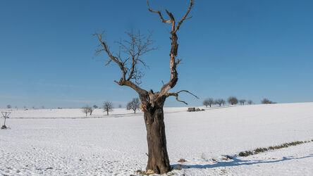 Bild mit Horizont, Tageslicht, Tageslicht, Baum, Panorama, Blauer Himmel, Feldblick, Winterimpressionen