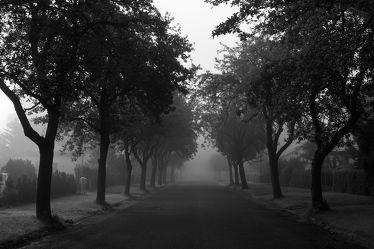 Bild mit Natur, Landschaften, Bäume, Nebel, Baum, Weg, Görlitz, Allee, schwarz weiß