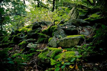 Bild mit Natur,Landschaften,Wälder,Felsen,Wald,Blätter,Steine,Görlitz,Moos