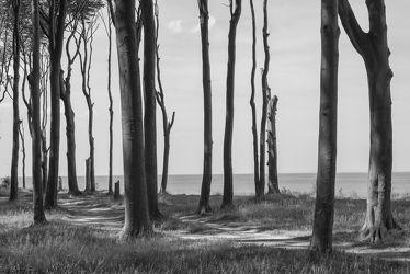 Küstenwald_4