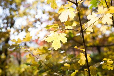 Bild mit Natur, Bäume, Wälder, Herbst, Wald, Baum, Blätter, Görlitz, Landeskrone, Görlitz Umgebung