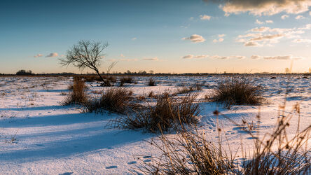 Winter in der Hammeniederung