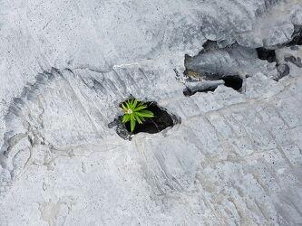 Bild mit Natur, Felsen, Stein, Pflanze, Irland, Gestein, Inishmore