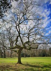 Bild mit Parks, Baumkrone, Baum, Baum, Baumgewächs, Sonnenschein durch eine Baumkrone, Stadtpark, Naturpark, parklandschaft, Optik