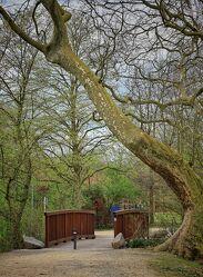 Bild mit Grün, Bäume, Frühling, Weg, Steine, Park, Holzbrücke