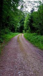 Bild mit Bäume, Wege, Wald, Waldweg