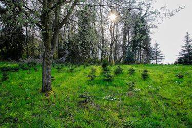 Bild mit Landschaften, Sonne, Zauberwald, Schattenspiel