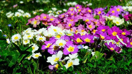 Bild mit Blumen, Frühling, Wiese, frühlingsblumen, farbenfroh