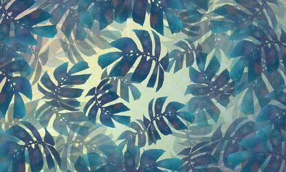 Bild mit Blätter, Pflanze, Blattstruktur, Monstera, Fensterblatt, Araceae
