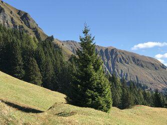 Bild mit Berge und Hügel, Berge, Tanne, Bergwelten, Tannenbaum