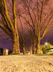 Bild mit Wasser, Himmel, Bäume, Straßen und Wege
