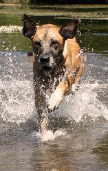 Bild mit Wasser, Gewässer, Haustiere, Hunde, Hund, Baden, Haustier