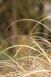 Bild mit Gräser, Strand, Hintergrund, Abstrakte Kunst, Abstraktes in Floral, Wind, Dekoration, grußkarte, Wanddekoration, photographybynicolealan